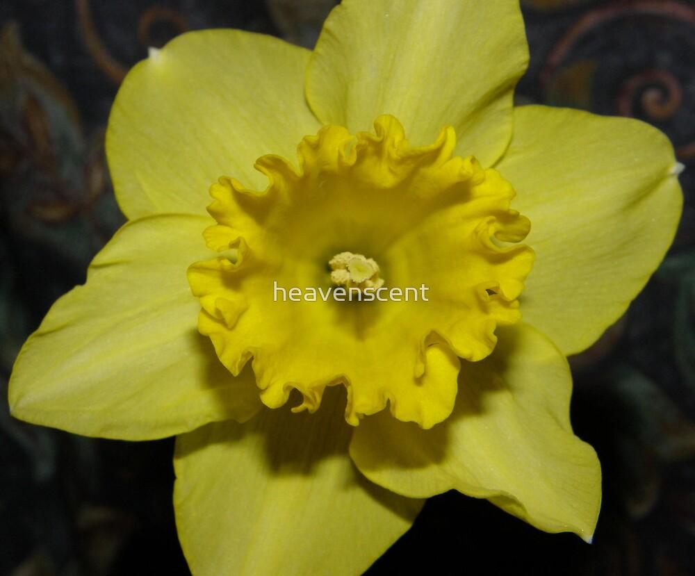 Daffodill flower by heavenscent