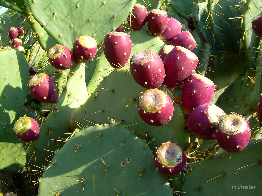 Prickly Pear by mwfoster