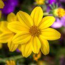 Yellow by John Velocci