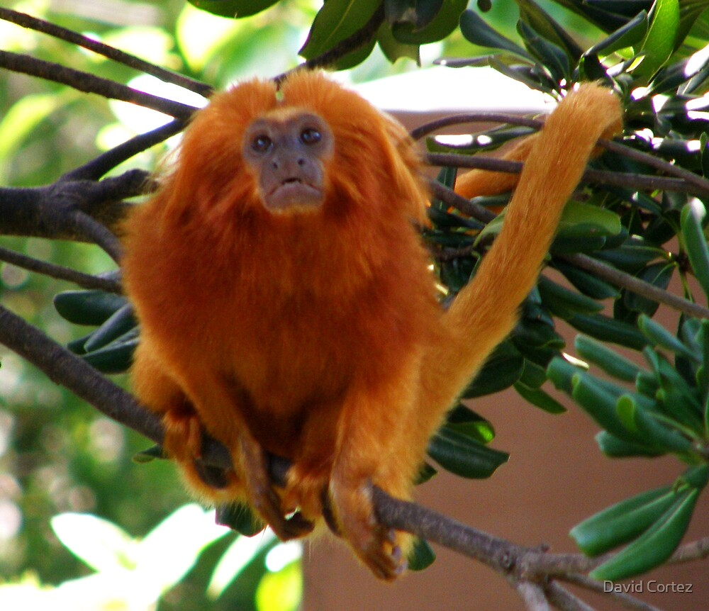 My Orange Friend by David Cortez