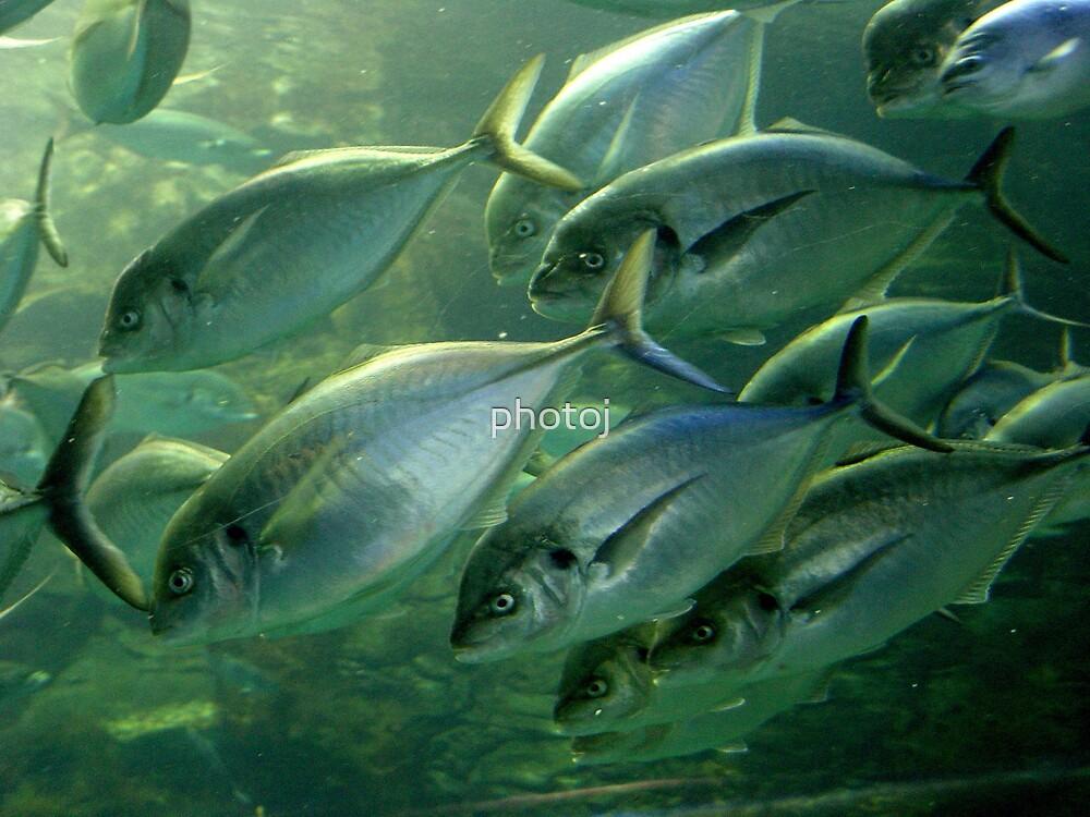photoj  school of fish by photoj