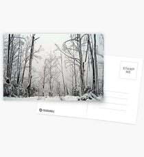 Snow Trees Postcards