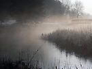Of Fog and Frost by Robin Clifton