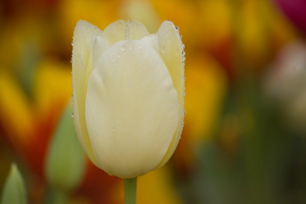 Spring by Elana Halvorson