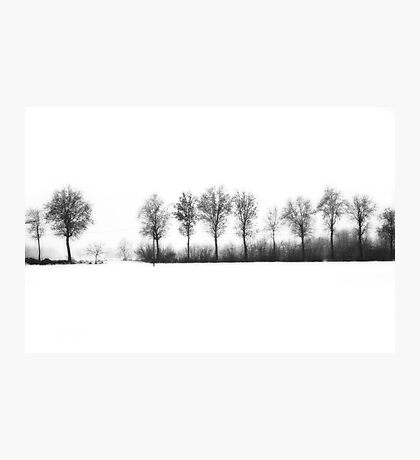 Winter bareness Photographic Print