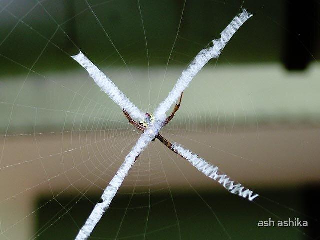 the web by ash ashika