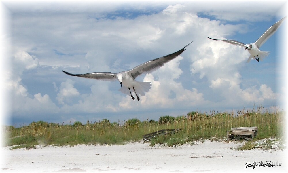 Caught In Flight by Judy Gayle Waller