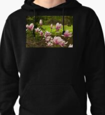 Blooming Magnolia Tree Close-up Pullover Hoodie