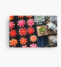 Colorful Cactuses Canvas Print