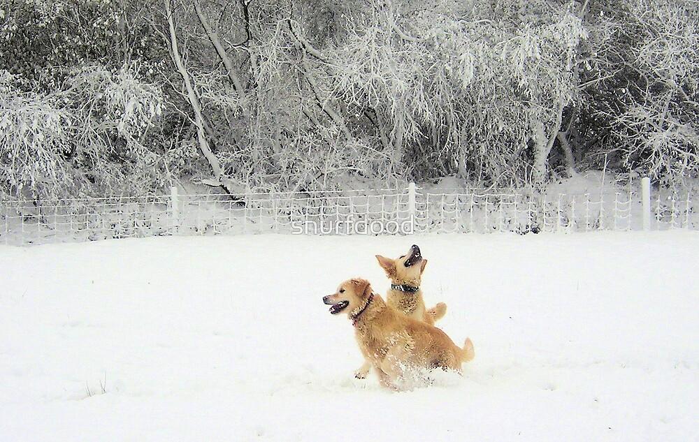Spot the (Snow) Ball! by snurfdood
