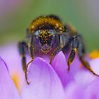 I Have My Bee- d- Eye On You by relayer51