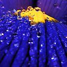 Rain Drops by BlaizerB