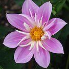Purple Flower by Andy Harris