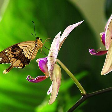 Butterfly on Flower by leizure