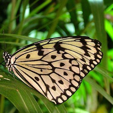 Butterfly on leaf by leizure