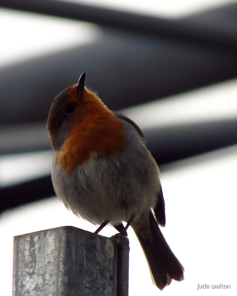 English Robin by jude walton