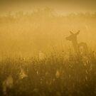 Morning Light by Martin Griffett