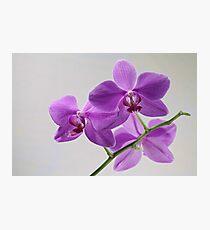 orchid flowers macro shot Photographic Print