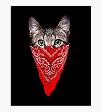 Gangster Cat Photographic Print