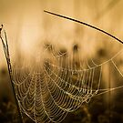 Web by Martin Griffett