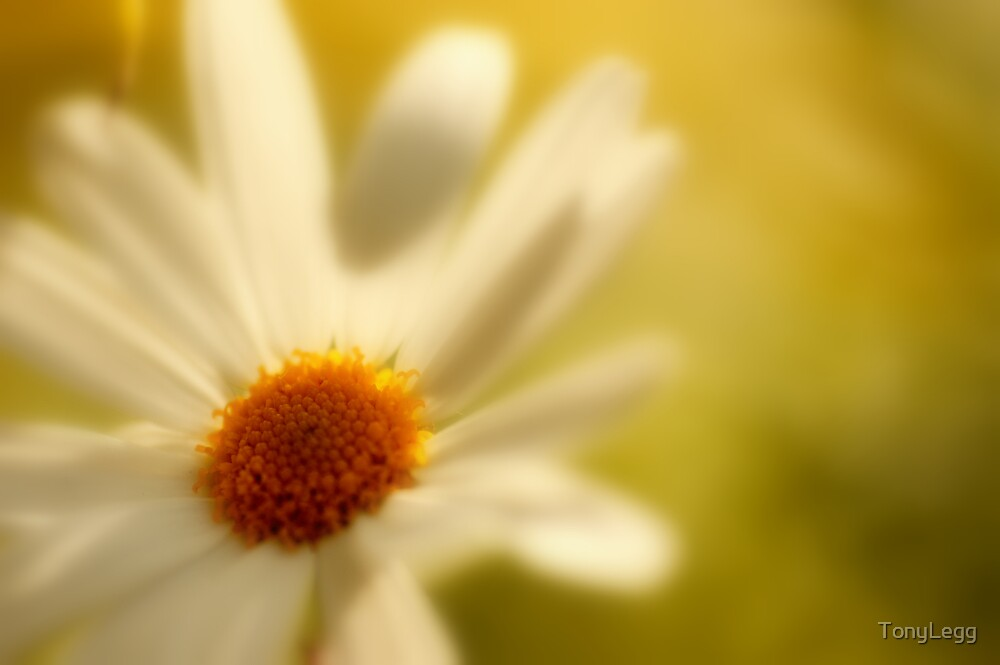 Sunshine  by TonyLegg