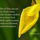 Wisdom from God ~ 1 Corinthians 1: 30 by Robin Clifton