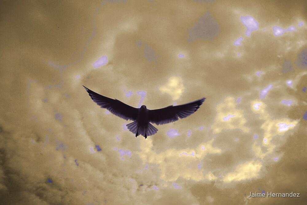 Freedom by Jaime Hernandez