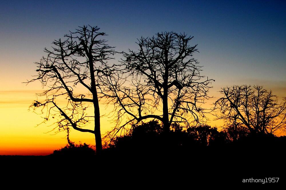 Kakadu Sunset by anthony1957