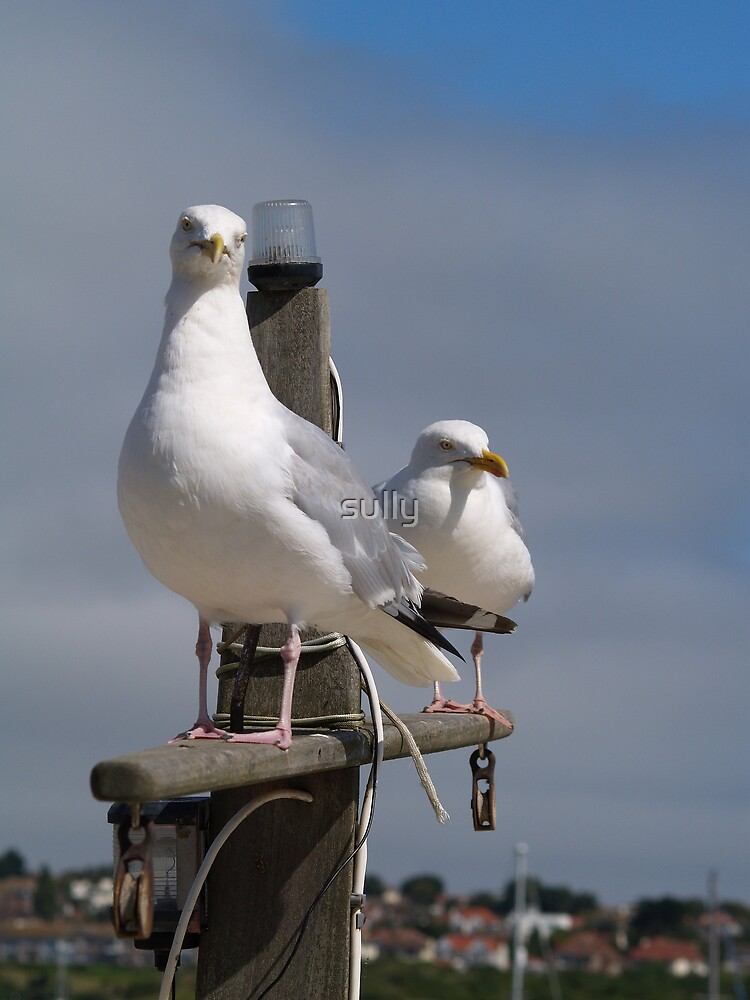 the birds by sully