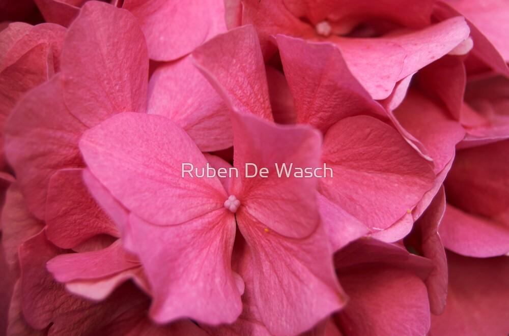 Pink by Ruben De Wasch