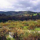 Avon Valley - Western Australia  by EOS20