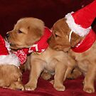 Santa Pups- Max, Buttercup, Rosie by goldnzrule