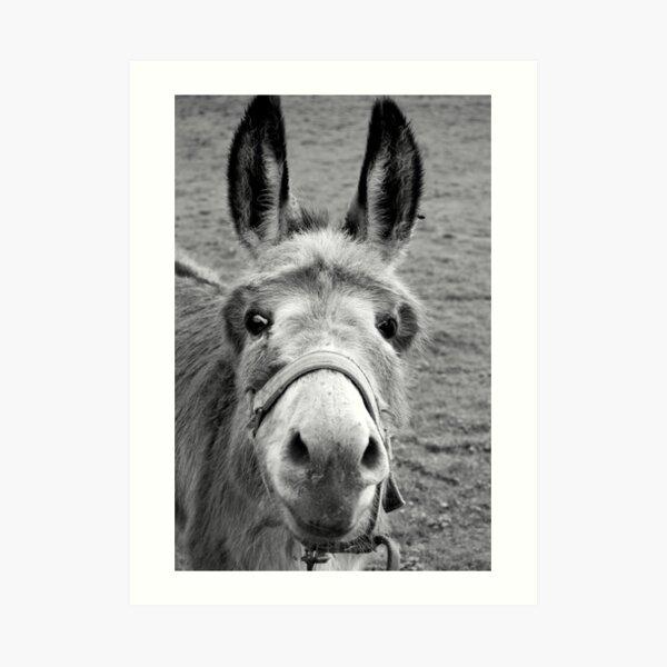 Mule Art Print