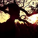 SUNSET SILHOUETTE  by TANYA WILLIAMS