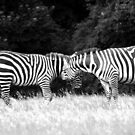 STRIPE ATTACK by TANYA WILLIAMS