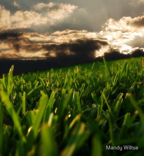 Dreamland by Mandy Wiltse