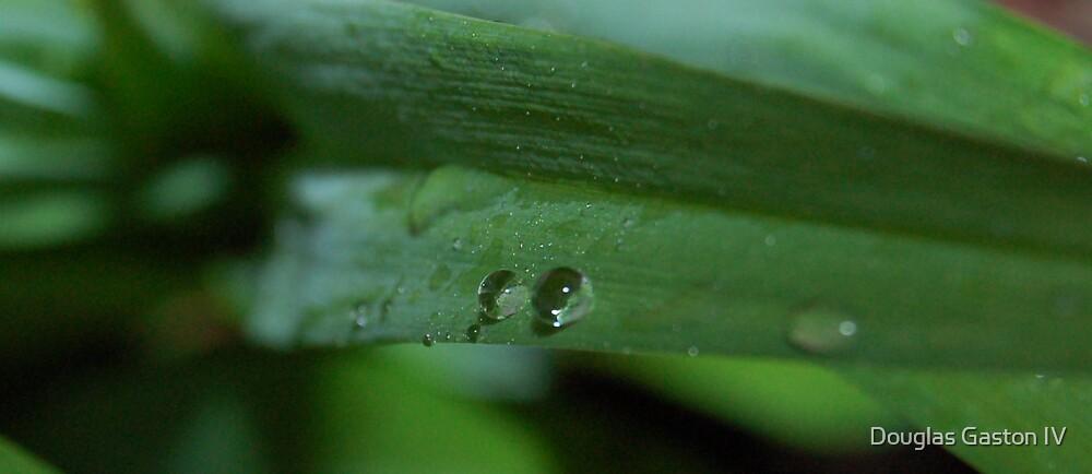 Water drops by Douglas Gaston IV