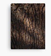 Bark Canvas Print