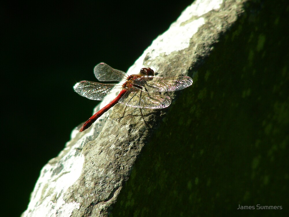 dragonfly by James Summers