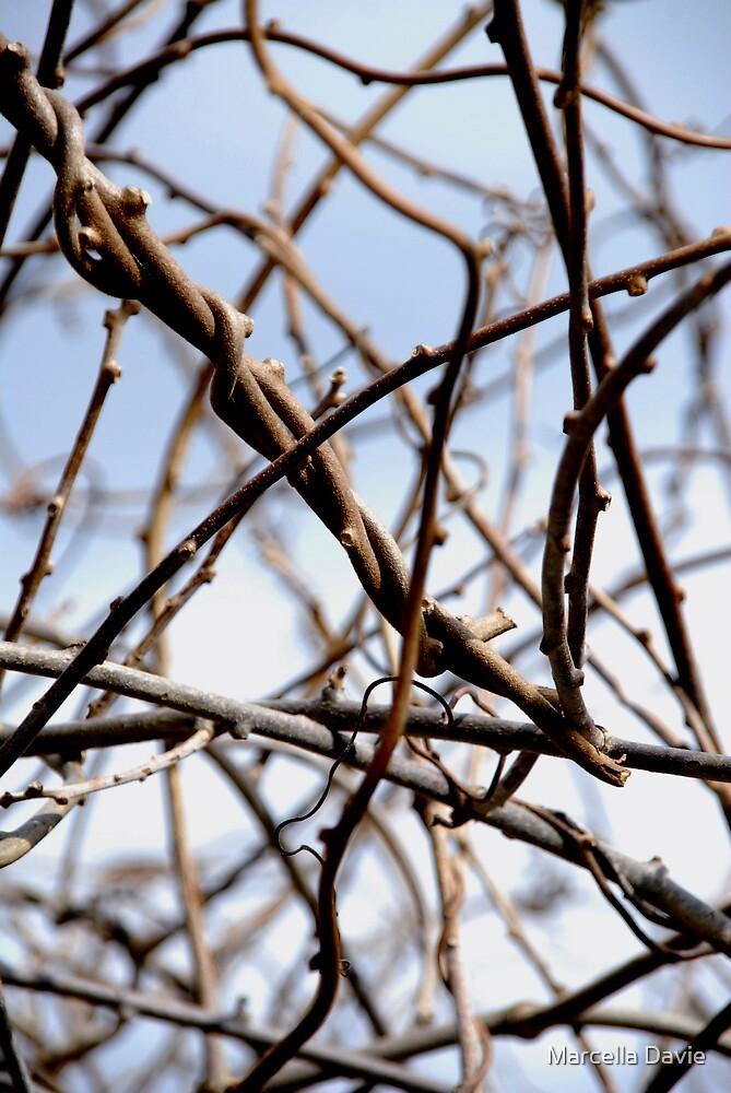 Twigs 2 by Marcella Davie