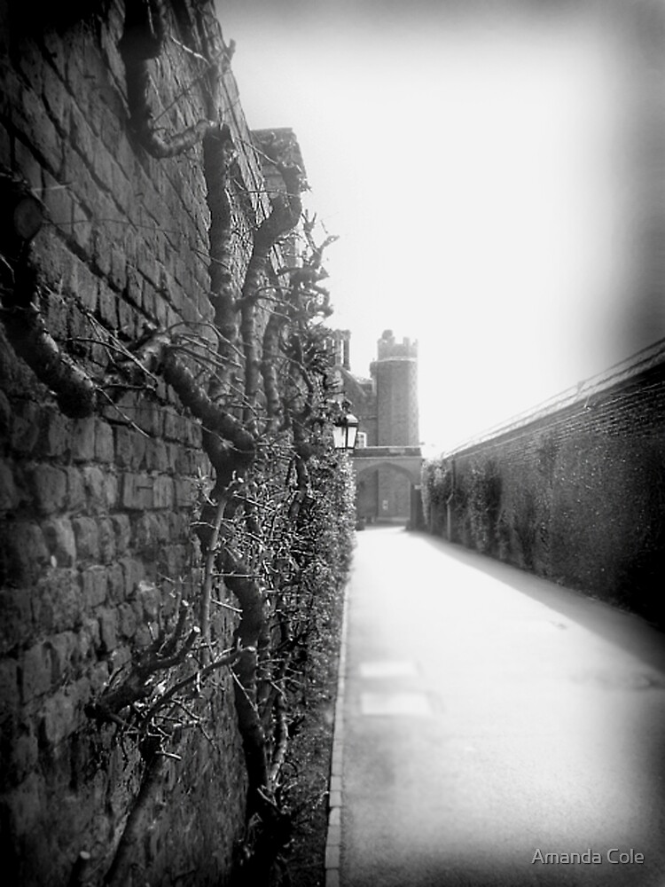 Castle wall by Amanda Cole