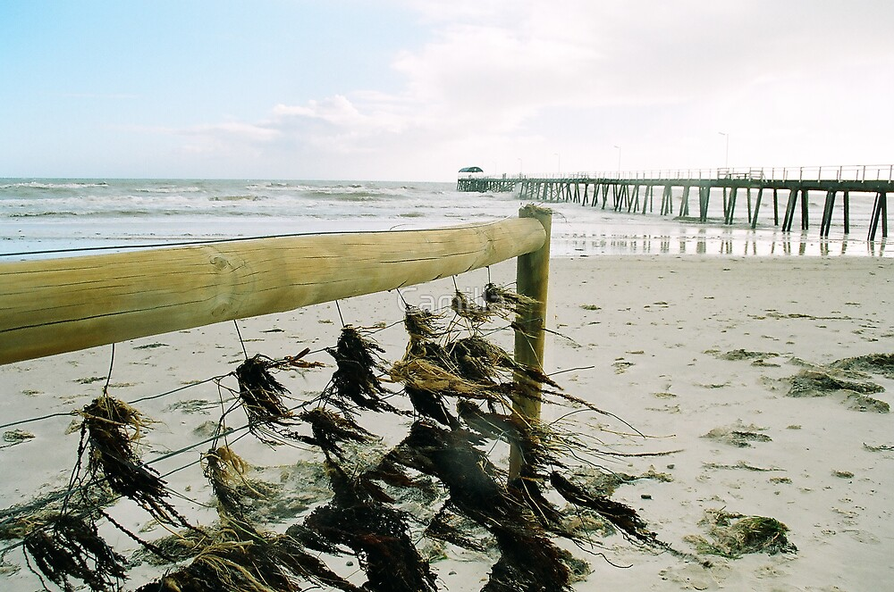 After The King Tide by Camilla