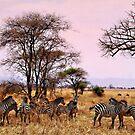 Zebra's in the Serengti 2016 by maureenclark
