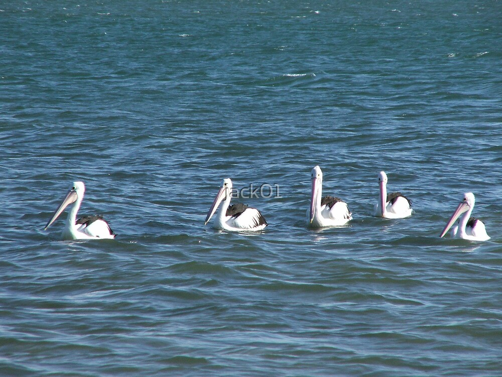5 little pelicans went out 1 day  by jack01