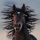 Bad Hair Day - Close up.... by Robbie Knight