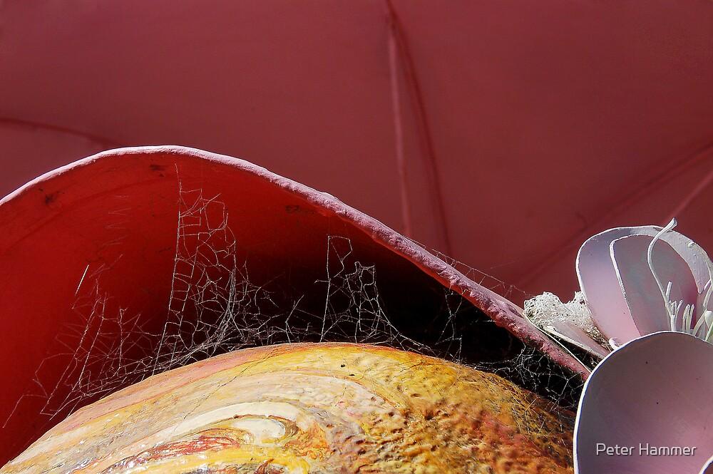 Cobwebs by Peter Hammer