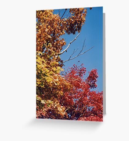 Three Tones of Autumn Greeting Card