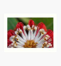 Scarlet Banksia 1 Art Print