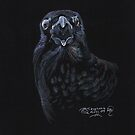 Screaming raven Crow by Stephanie Small