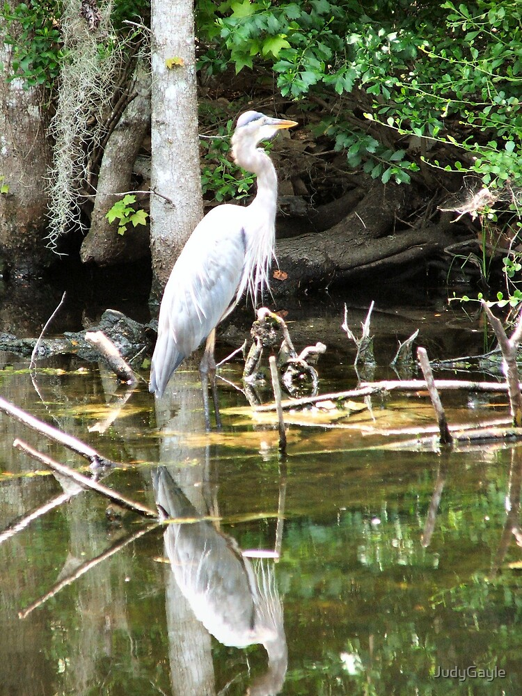 Wow, Look at that reflection by Judy Gayle Waller
